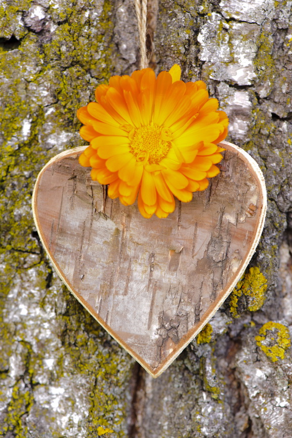 heart at tree bark