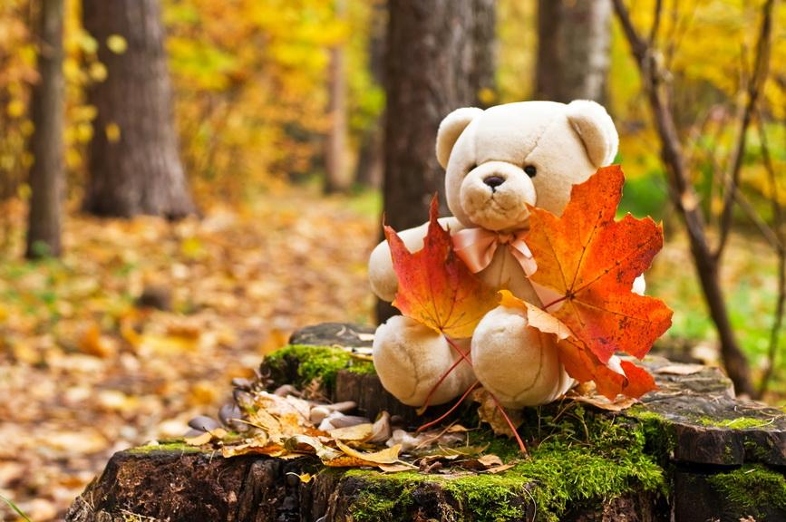 teddy bear in autumn park